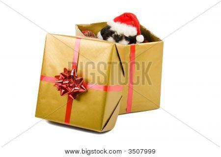 Regalo de Navidad de Santa cachorro