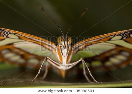 Beautiful Butterfly closeup