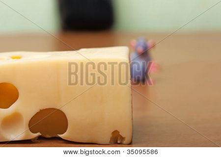 Rodent animal pest mouse smelling hole cheese food
