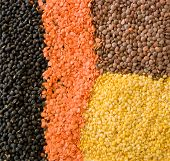 stock photo of indian food  - Collage of the four essential lentils used in Indian cooking - JPG