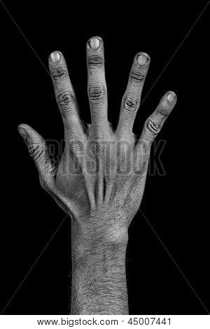 Hand On Black Back - Five