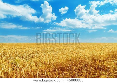 blue sky with clouds and golden field