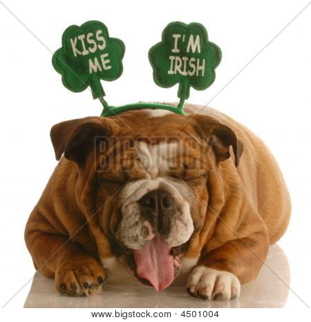 Bulldog Kiss Me Im Irish Laughing