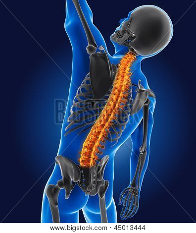 3D medical man with skeleton spine highlighted