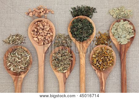 Herb selection for alternative health remedies in olive wood spoons over beige textured background.