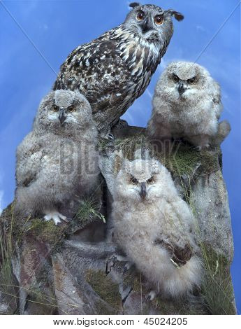Owl Family - Parent And Three Chick Over Blue Sky