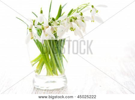 Bouquet Of Snowdrop Flowers