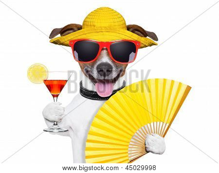 Summer Cocktail Dog