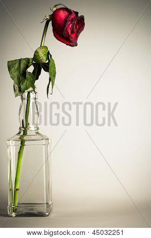 vintage parched rose