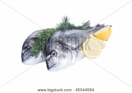 Two Gilthead Fishes With Lemon