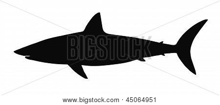 Vector silhouette of shark.