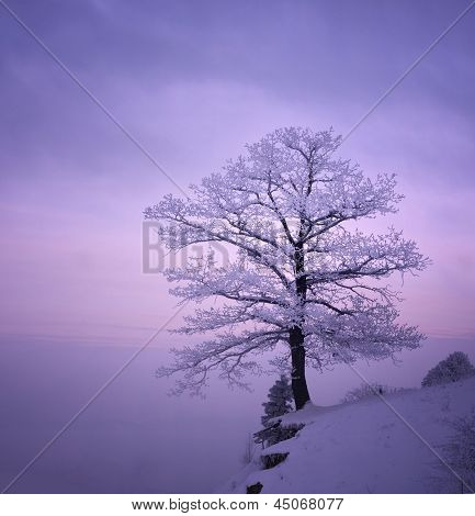 Snowy Tree In A Winter Twilight