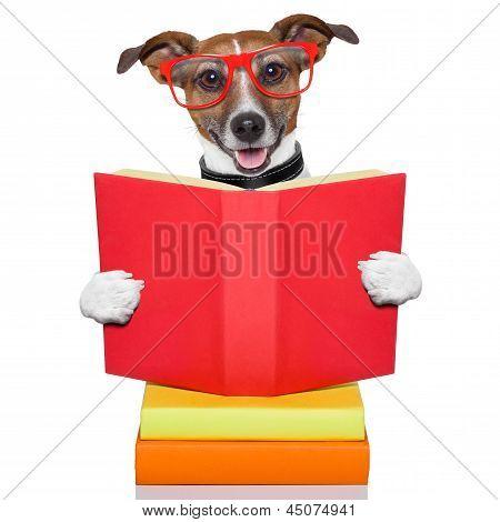 School Learing Dog