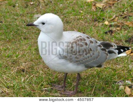 eingebettet von Sea gull