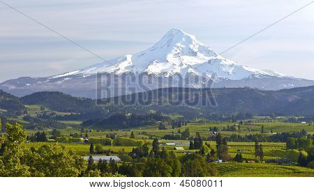 Mt. Hood And Hood River Valley Panorama.