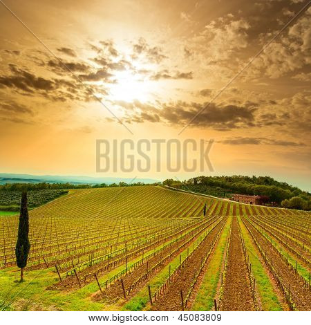 Chianti Region, Vineyard, Trees And Farm On Sunset. Tuscany, Italy