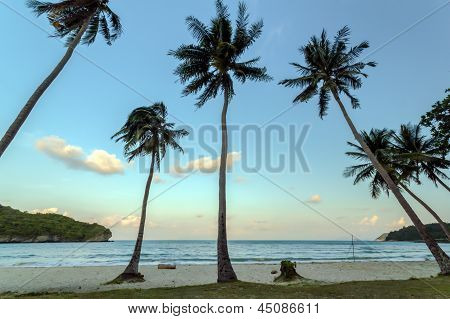 Coconut Trees On A Beach