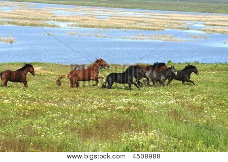 Horses On The Meadow