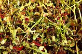 image of carnivorous plants  - color carnivorous plants as very nice natural background