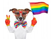 stock photo of gay symbol  - gay pride dog waving a rainbow flag - JPG