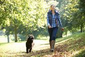 stock photo of hound dog  - woman walking her black dog in the park on a sunny day - JPG