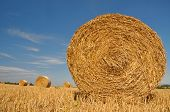 stock photo of fall-wheat  - Straw bales on farmland with blue sky - JPG