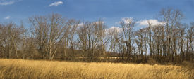 picture of marlboro  - A panoramic view of a field and wooded area in Big Brook Park in Marlboro New Jersey - JPG