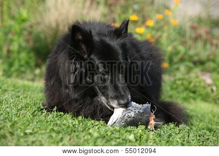 Hungry Dog Eating Fresh Fish