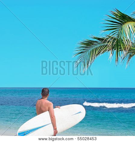 Surfer And Palm