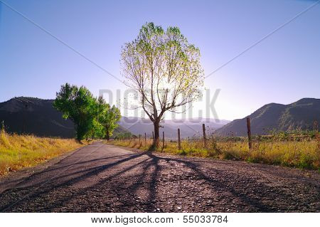 long shadow of tree in backlight agaist violet morning, Albania
