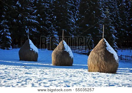Snow covered haystacks at winter