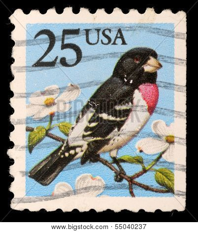 UNITED STATES OF AMERICA - CIRCA 1988: A stamp printed in the USA shows Rose-breasted Grosbeak - Pheucticus ludovicianus, circa 1988