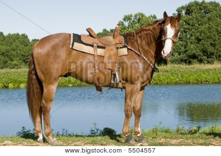 Horse In Front Of A Pond