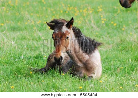 Beautiful Newborn Child Of Horse In The Meadow