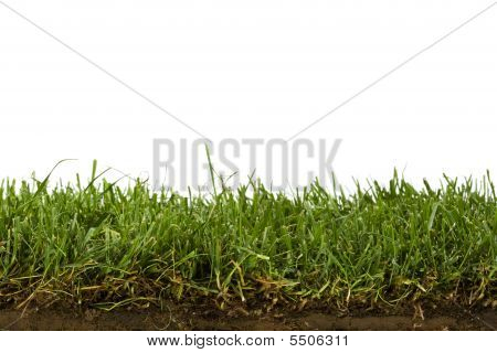 Lawn And Soil Cross-section Isolated On White