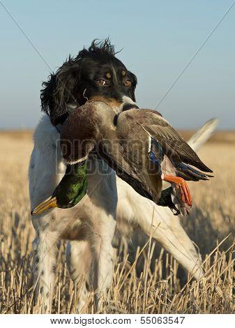 Hunters Dog