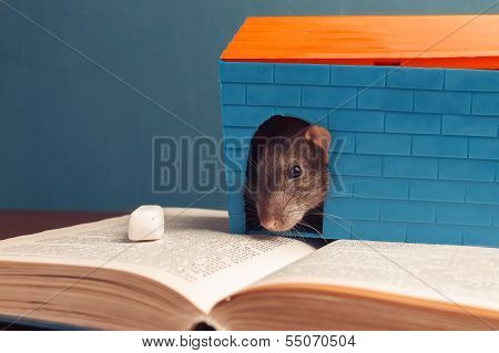 Mouse Is Sitting On A Book