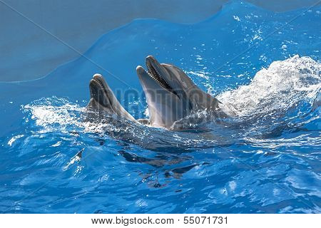 Dolphins In The Water Park