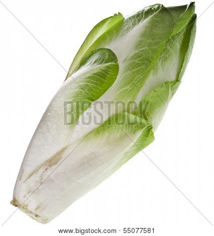 head of fresh endive chicory isolated on a white background