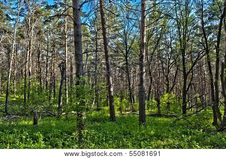 Forest, Trees