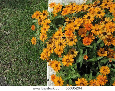Yellow flowers in garden on background