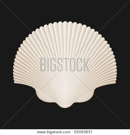 Brown Scallop Shell. Isolated On Black. Vector Illustration
