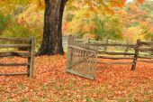 stock photo of split rail fence  - Split railed fence and open gate leading into a field with a maple tree and beautiful fall colors - JPG