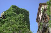 stock photo of outdated  - Outdated building completely overgrown with greenery in old town