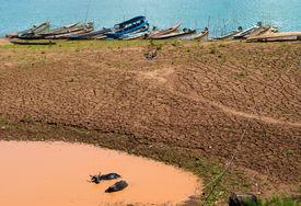 pic of wallow  - Buffalo relaxing in a mud wallow Near the Mekong River - JPG