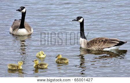 Gosling Group
