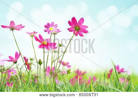 Beautiful flowers field on sunny day
