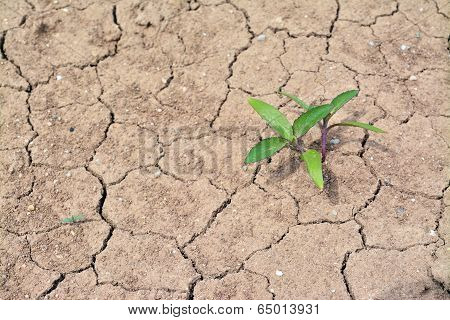 Plant Growing On Dried Soil