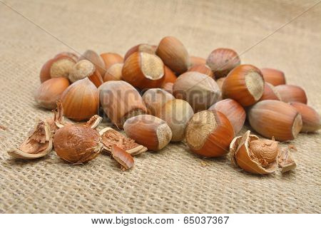 Nuts. Group of filberts on the pouch (sac, saccule)