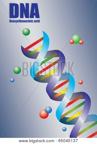 Double Helix Dna In Color Vector Illustration